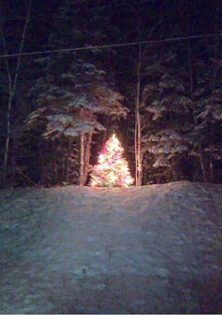 Wallagrass, Maine (Date unknown) -- A Christmas tree sits on the property of Chris and Becky Toussaint of Wallagrass. (Contributed photo)